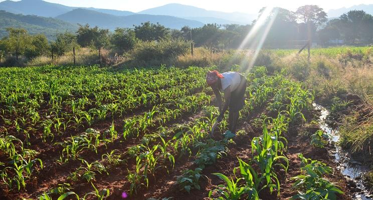 Kleinbaeuerin in Simabwe bewirtschaftet ihr Feld