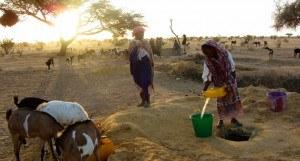 Mädchen in Senegal mit Ziegen an einer Wasserstelle