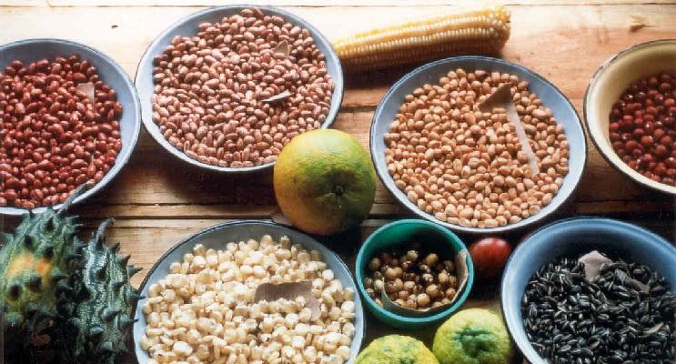 Schüsseln mit verschiedenem Saatgut