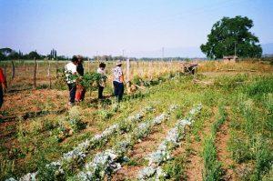 Auf dem Feld: In Argentinien arbeiten wir gemeinsam mit der indigenen Bevölkerung an der Sicherung von (kollektiven) Landrechten.