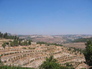 Felder in Palästina