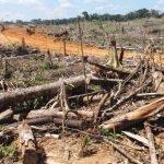 Regenwaldabholzung in Peru