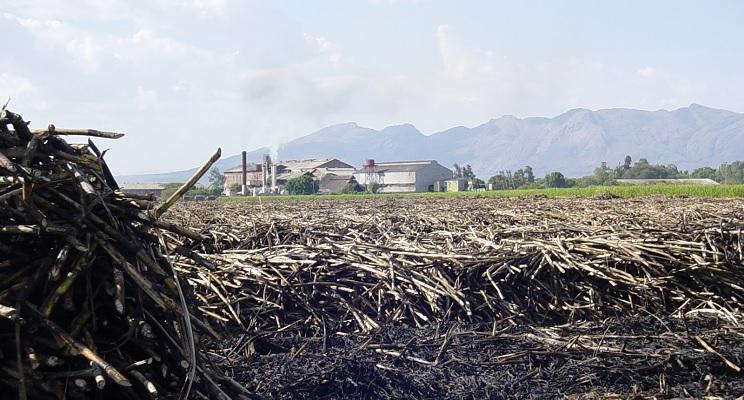 Zuckerrohrplantage nach der Ernte.